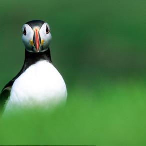 Shetland Islands: End of Britain