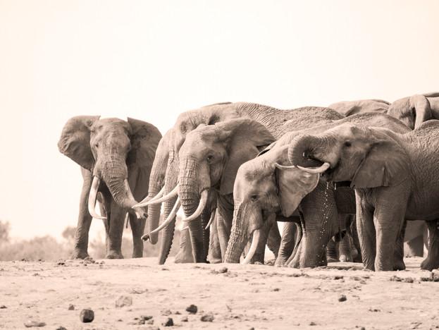 WilliamGray-Photography-Elephants Tsavo.