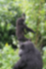 Wildlife_Wishlist_Africa-27.JPG