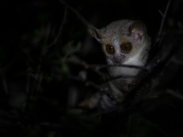 3000px Madagascar-11.jpg