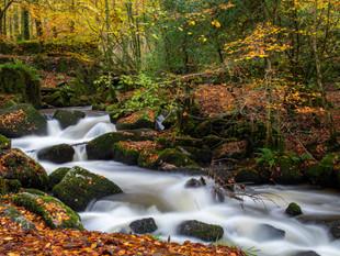 Autumn woodland at Kennall Vale