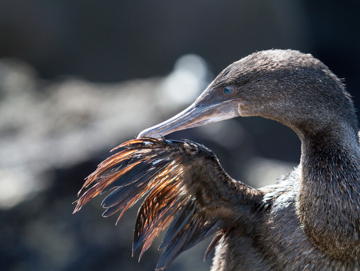 Galapagos: Monthly Wildlife Guide