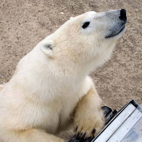 What to do in October: Eye to Eye with Ice Bears in Churchill, Canada