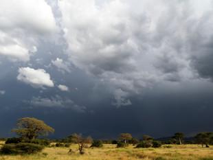 WilliamGray-Photography-Ruaha Tanzania.J