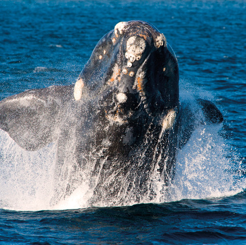 Where can I see Whales for Free?