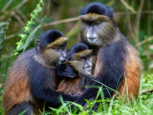 3000px Rwanda.jpg
