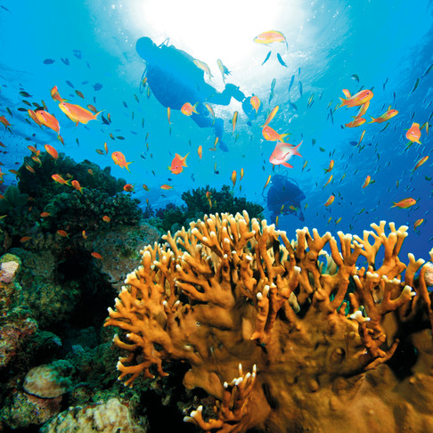 Responsible Travel Tips: Code Green for Divers and Snorkellers