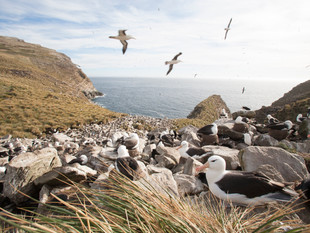 3000px Falklands-8.jpg