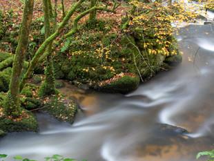 River at Kennall Vale