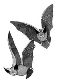 Bats pretending to be vampires