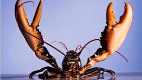 Lobster Trivia