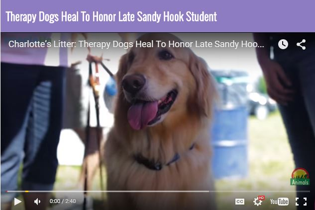 Charlotte's Litter Therapy Dog Event