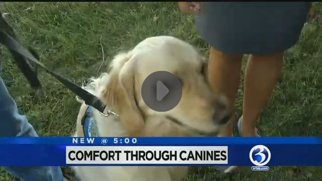 Comfort Through Canines