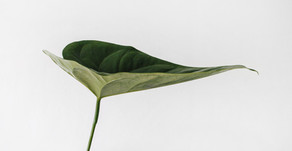 Decoding Bio-energetic Architecture