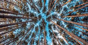 'Vayu Tatva'.....the air we breathe
