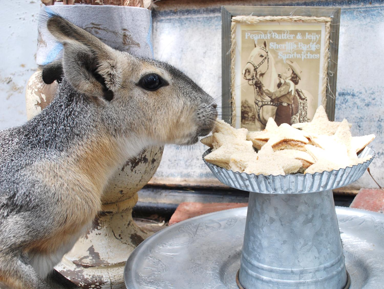 Mini Kangaroo Sandwich Bandit