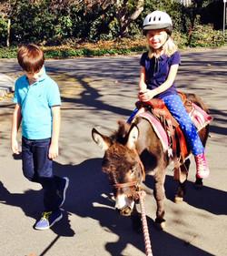 Riding Donkey Sparrow To Starbucks