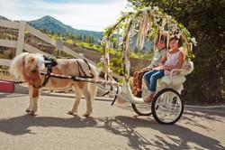Unicorn Carriage Rides!