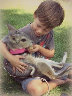 Lunch Time For Mini Kangaroo