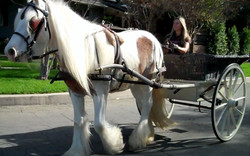 Finn Carriage Driving