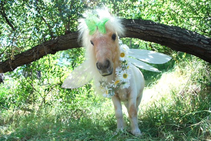 Fairy Willow