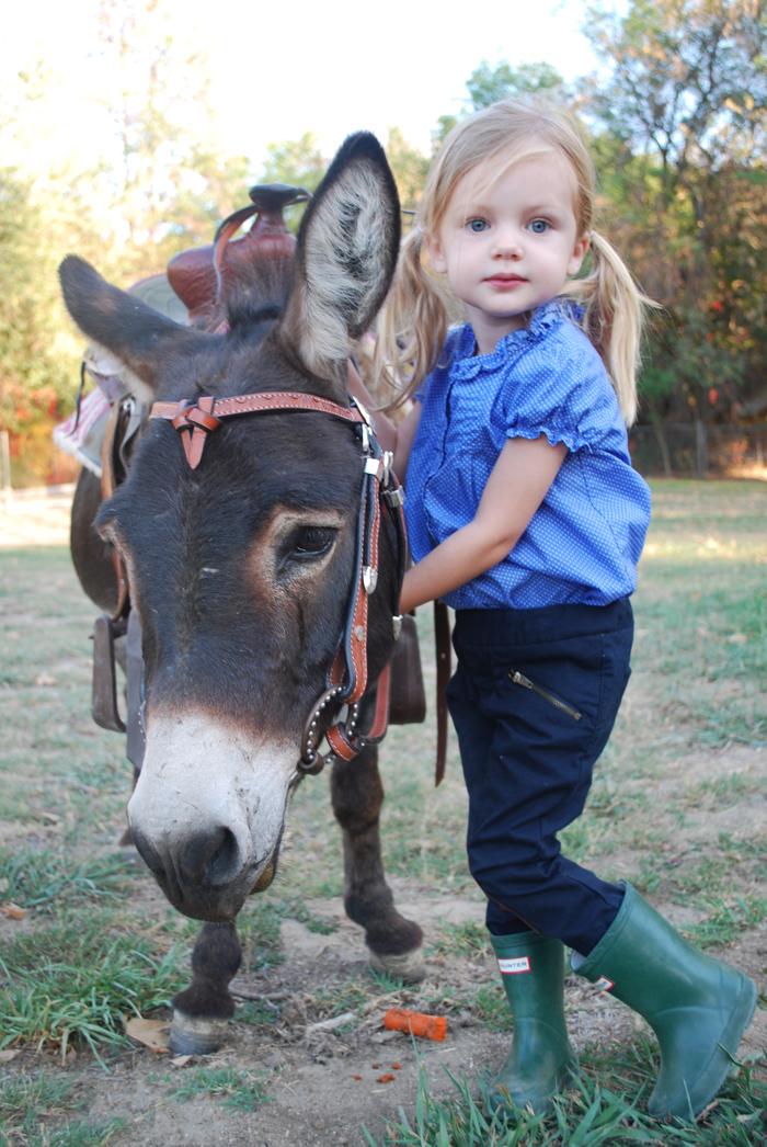 Donkey Greeter