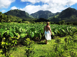 Fall Field Kauai