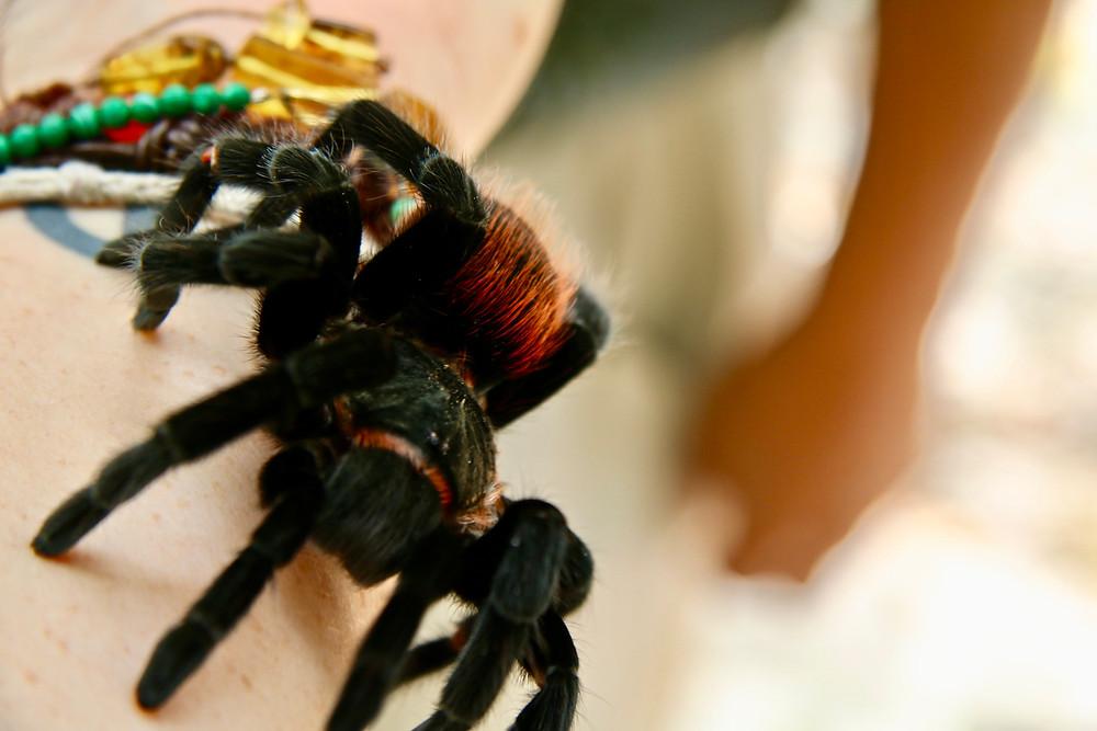 Yes that's a huge tarantula on my arm.