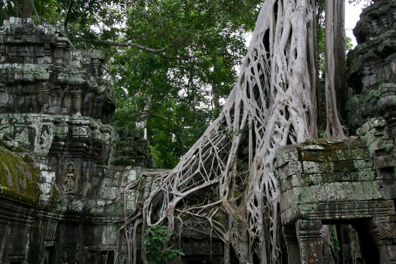 Ta Prohm aka Tomb Raider temple, Cambodia