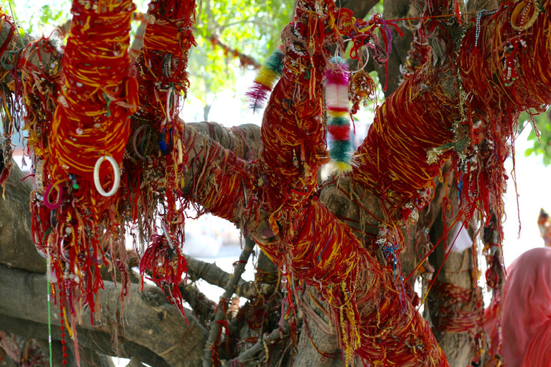 Blessing Tree at Om Banna Temple India