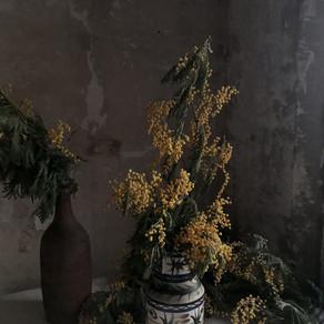 monday dry mimosa
