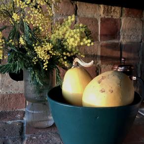 monday mimosa