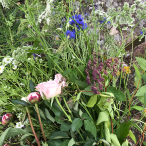monday, bleuet bouquet