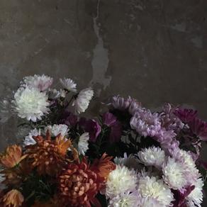monday chrysanthèmes