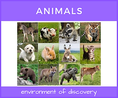 CCM Animals-4.png