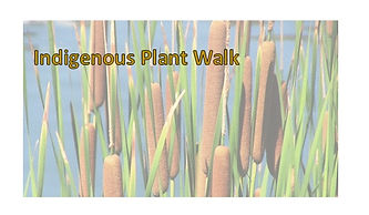 Indegenous Plant Walk.jpg