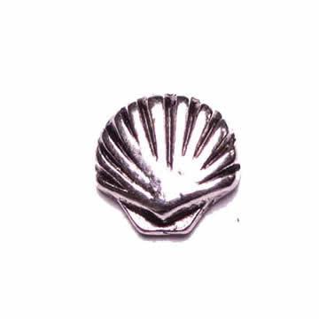 Seashell (Small)