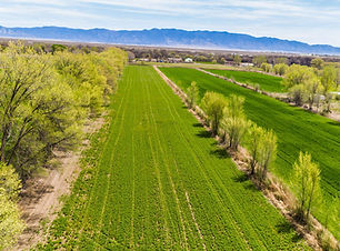 5 Acres of Residential Land or Farm Land for Sale in Belen, New Mexico listed by Marisa Chavez at Nino Trujillo and Company.
