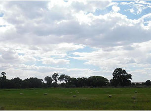 Lot Land for Sale, 4.5 Acres, Secluded, Irrigated Land, Water Rights in Belen, New Mexico listed with Nino Trujillo an Company by Realtor Nicole Golino.