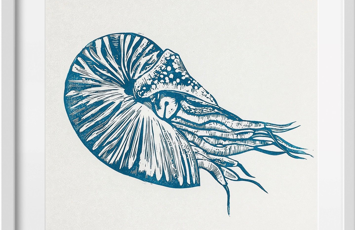 Amy Cundall - Framed linocut Nautilus