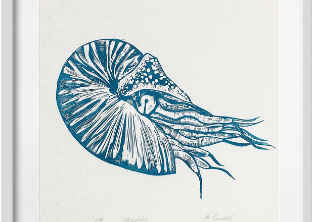 Amy Cundall - Framed linocut Nautilus