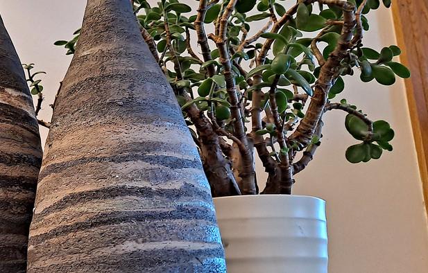 Hilary Durie - 'Strata' Bottle Vases