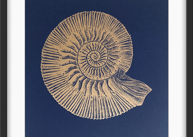 Amy Cundall - Lino Print 'Ammonite' in Gold on Navy