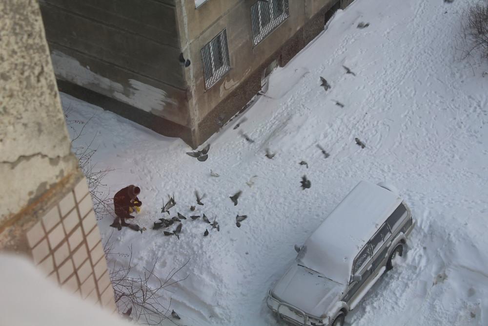 Сизари зимой
