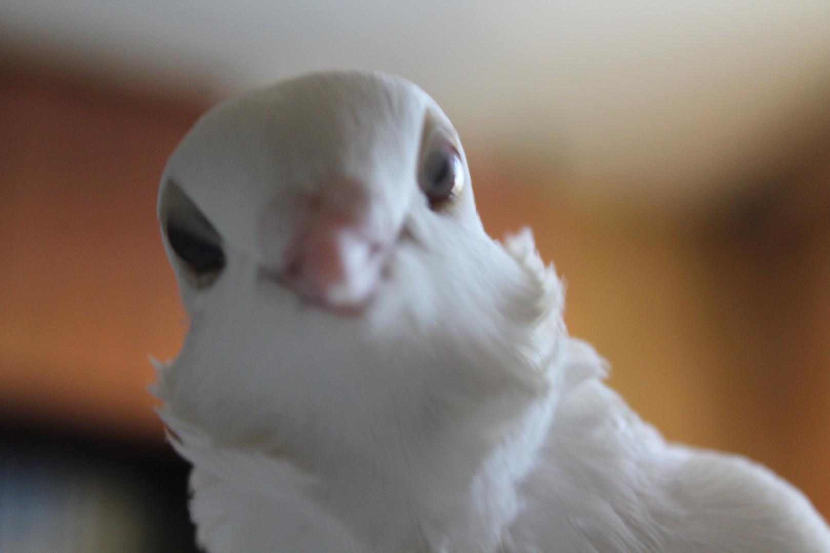 Наша чайка не боится фотоаппарата