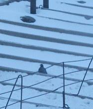 Голубь на крыше в зимний вечер