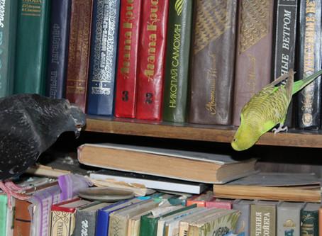 """Голуби - любознательные птицы: """"Страшно. Но интересно!"""""""
