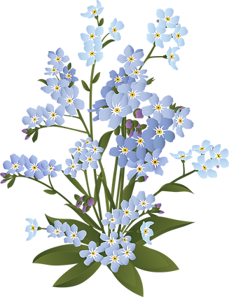 forget-me-not-6009034_1280.png