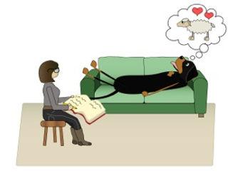 Klicker Fokus - problemhund, hundkurser, Nacka & Värmdö