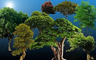 Bush_Tree Package